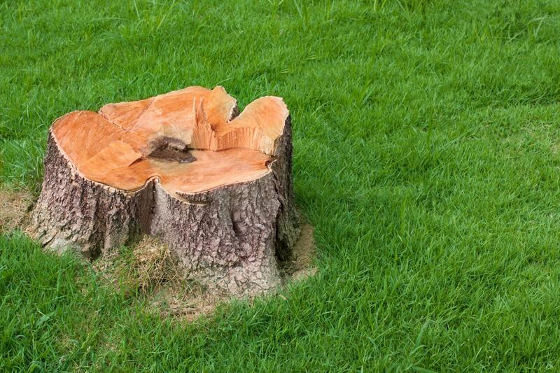 professional tree stump grinding