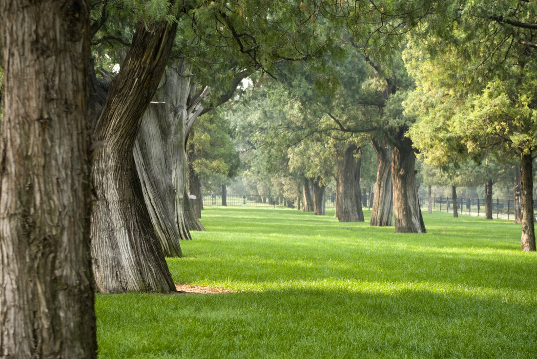 professional tree health maintenance and care