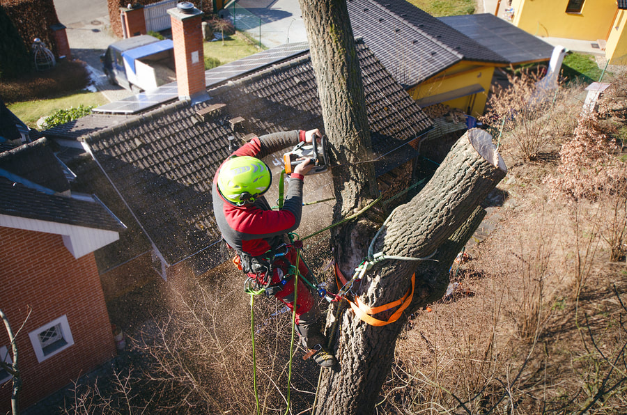 professional tree cabling service