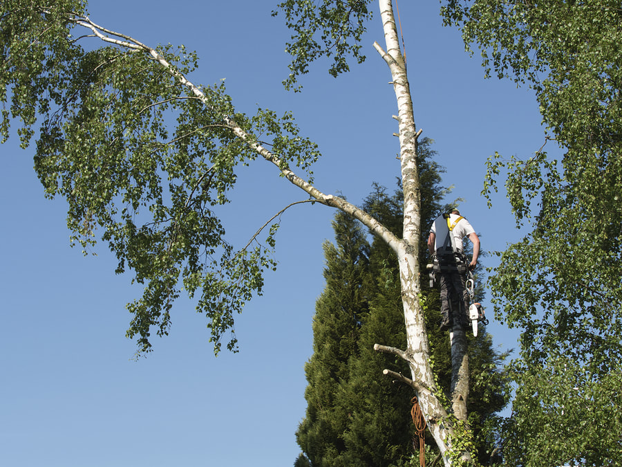 professional tree trimming and pruning