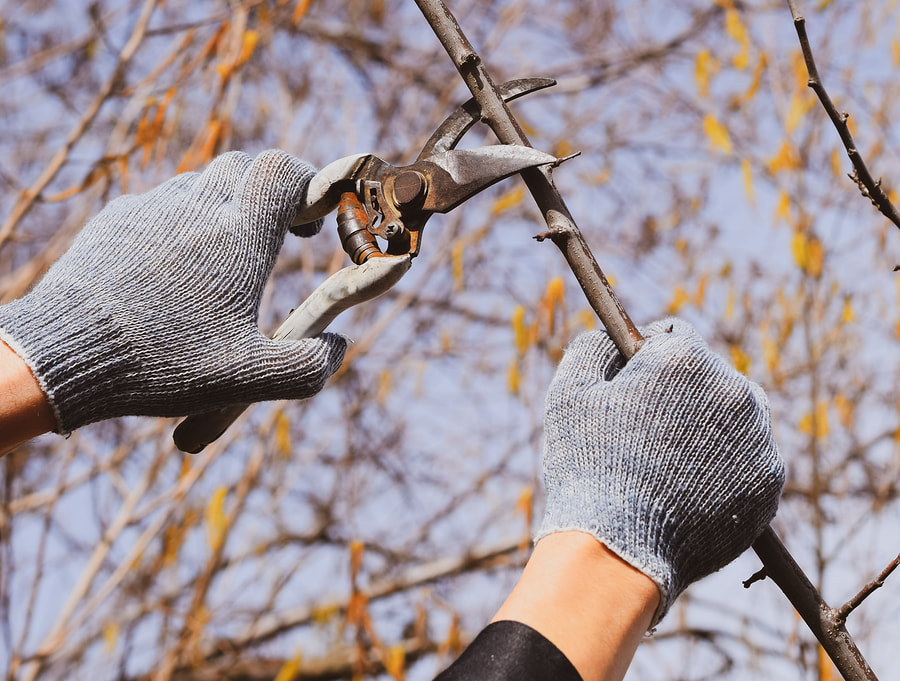 affordable tree trimming and pruning